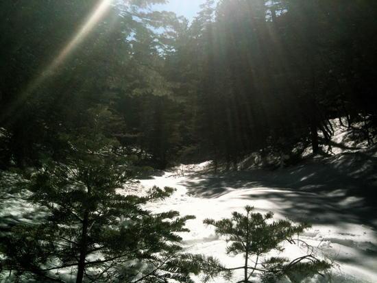 Snowed in trail Sandias