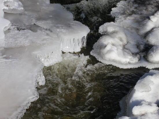 mosquito ice