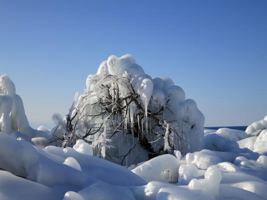 iced trees 2