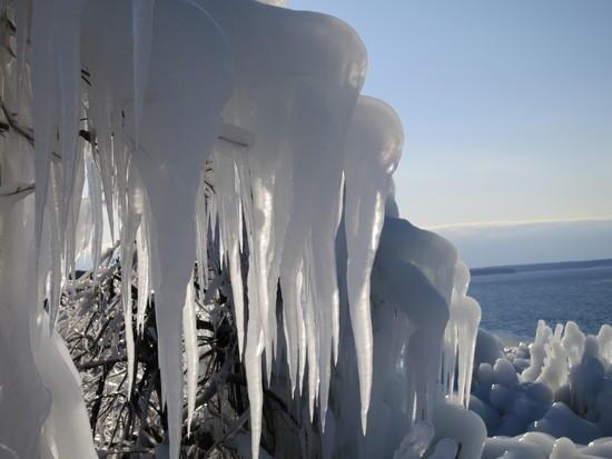 iced trees 5