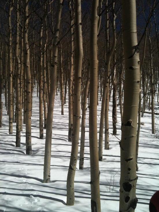 Off trail snowshoe Santa Fe