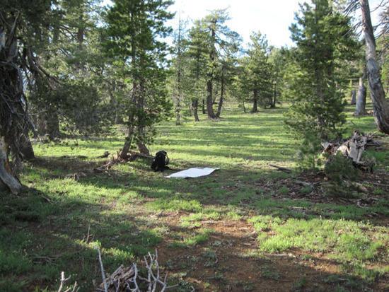 grassy cowboy camp