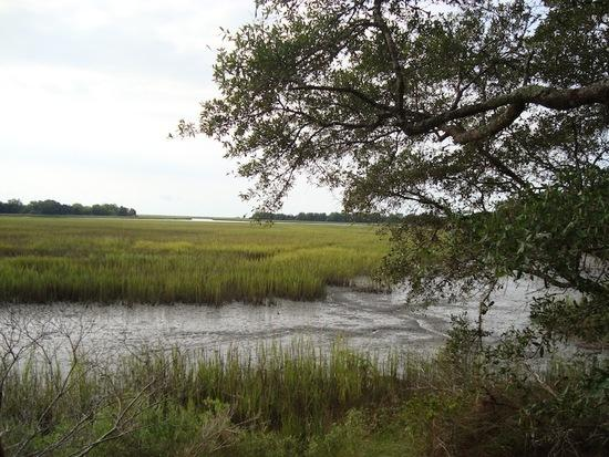 Marsh views