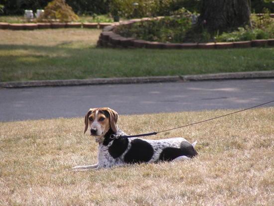 daisy lawn