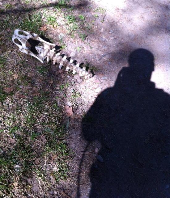 Skeleton on Bonito