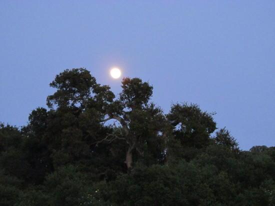 Moon over Arastradero Preserve
