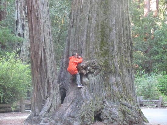Natalie on Redwood