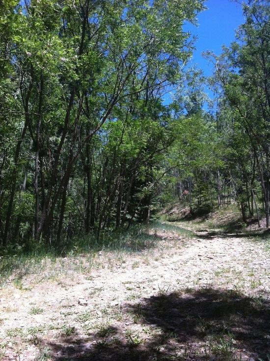 Rim trail and forest road junction