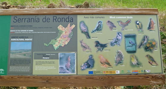 Spain birds1
