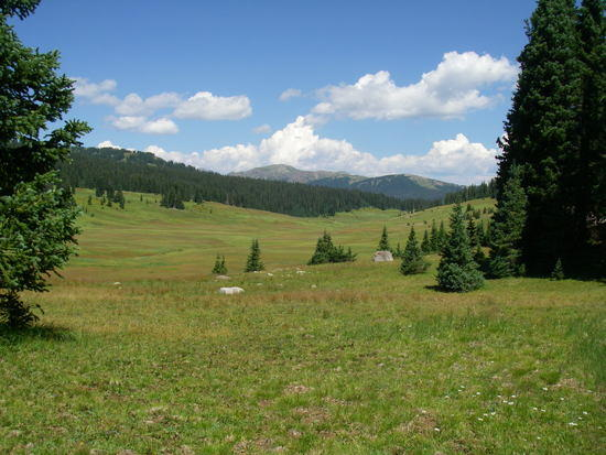 high meadow