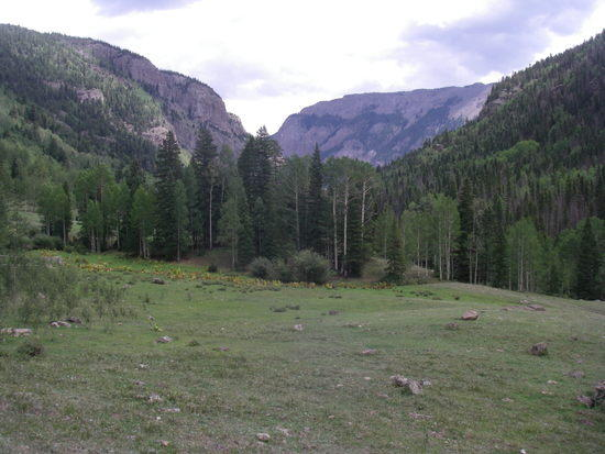 horse camp meadow