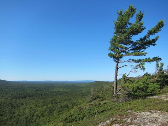 Escarpment tree