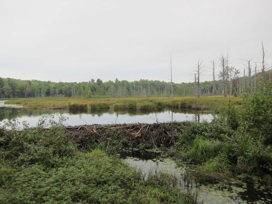 Dam on Lily Pond