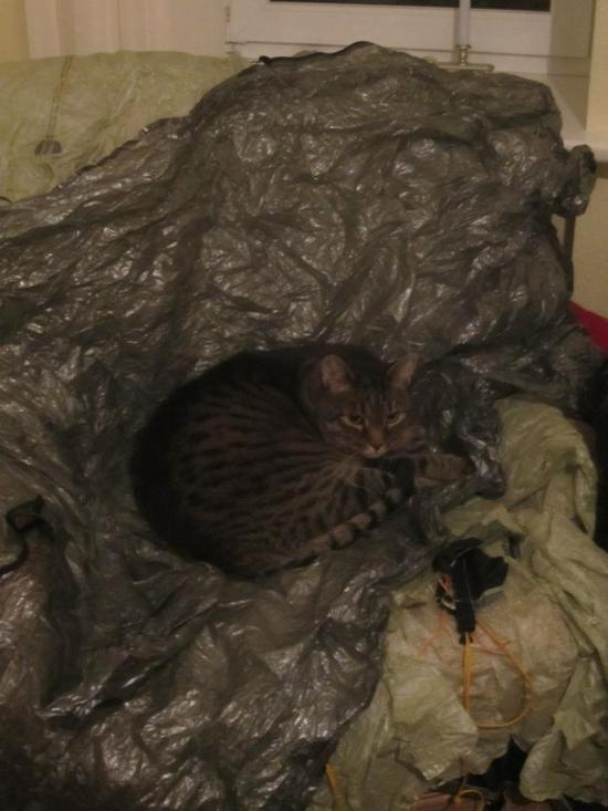 Cat on Cuben
