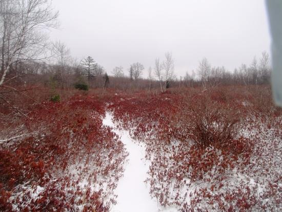 Hiking through a dry bog with some color