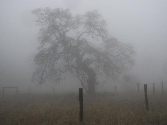 Ghostly World
