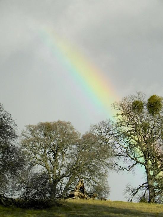 Rainbow, an auspicious beginning