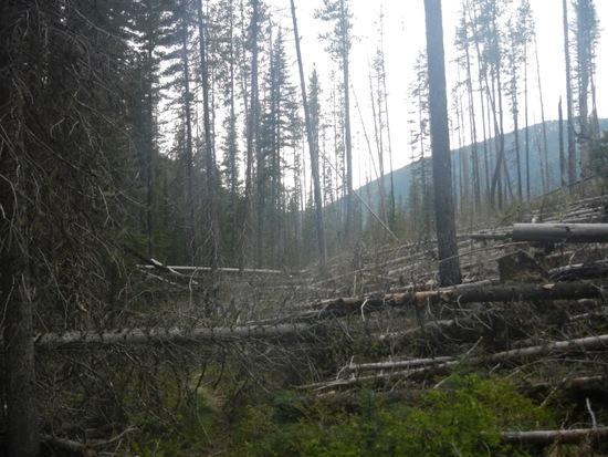 Long Creek logs