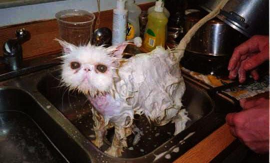 kat sink bath