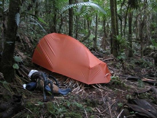 Imogene 2 in El Yunque Rainforest