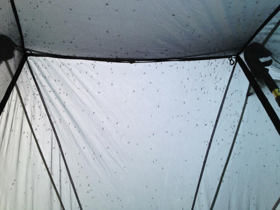 Mosquitos on the inside of the tent fly at Svine