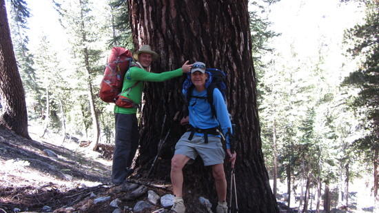 Yup, I'm a tree huger!