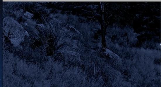 Moonlit Saguaro grassland