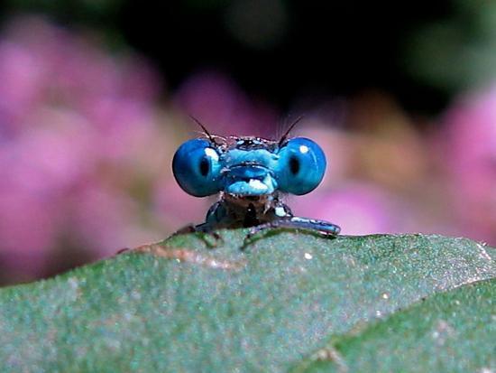MYOG Bug