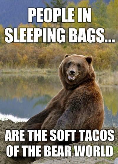 bear taco